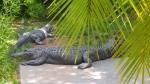 Zoo Adeladide